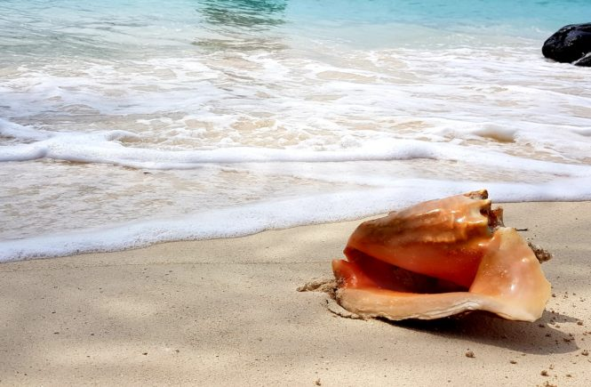 Seashell on beach in San Blas Islands